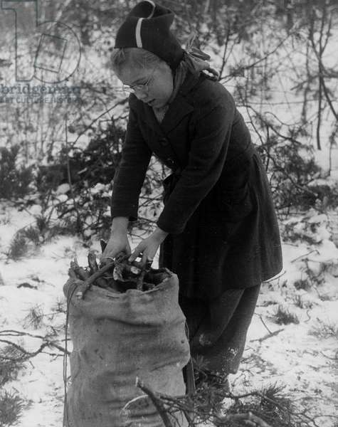 Second World War (1939-1945): Berlin Dahlem (Germany) February 21, 1946: In the Grunewald forest, fighting the cold, a young Berlin woman loads a bag of wood to heat herself under the surveillance of the American Military Government.
