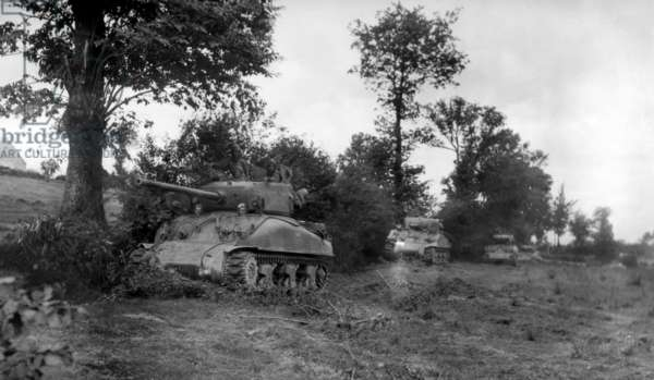 Four U.S. Sherman tanks hiding in a Norman Hedgerow during the Battle of the Falaise Pocket. August 3-7, 1944. Normandy, France, World War 2