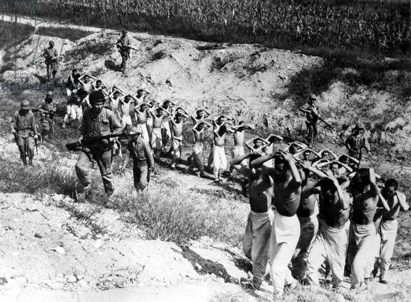 9/25/53--SOUTH KOREA: Some 40 North Korean prisoners are led to a prison camp after having been flushed out of corn fields in the Han River area during the drive for Seoul.
