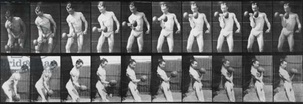 Consecutive images of man lifting a dumbbell. From Eadweard Muybridge's, ANIMAL LOCOMOTION, 1887