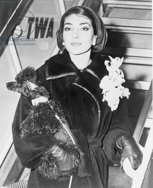 Maria Callas (1923-1977), holding a pet poodle arrives at New York's Idlewild (now JFK) Airport in 1958