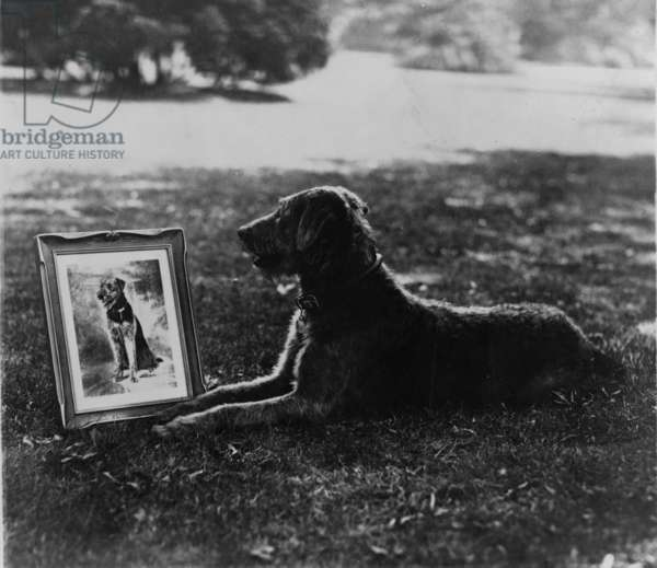 President Warren Harding's (1865-1923) pet dog, Laddie Boy and his portrait in silver, a radiotone presented to Mrs. Harding today. 1922 news photo