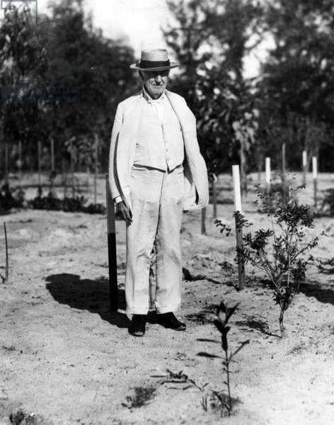 Thomas Edison experimenting with his rubber plant garden at his winter home in Fort Meyers, Florida. 01/18/29.