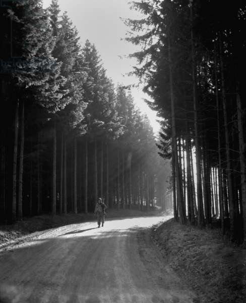 U.S. soldier walks the road through a forest in the Bastogne area. He was returning from the front lines of the Battle of the Bulge in Belgium or Luxembourg. December 27, 1944. World War 2