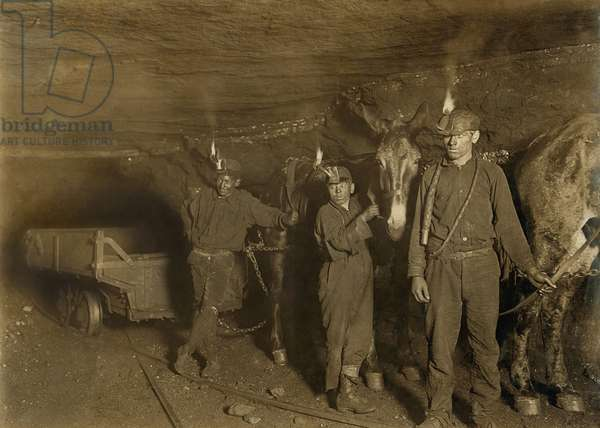 Drivers and Mules with young laborers in a West Virginia coal mine. October 1908 photo by Lewis Hine
