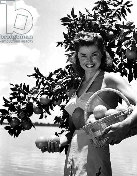 ESTHER WILLIAMS picking oranges in Winter Haven, FL. 1947.