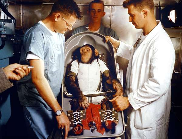 Mercury-Redstone 2 : le chimpanze Ham: Ham, a three-year-old chimpanzee, in his biopack couch. On January 31, 1961, Ham made the first sub-orbital test flight of the NASA Project Mercury Capsule before launching the fist American astronaut Alan Shepard in May 1961. ., Alan Shepard, Gus Grissom, Walter M. Schirra, Jr., and Donald K. Slayton. 1960