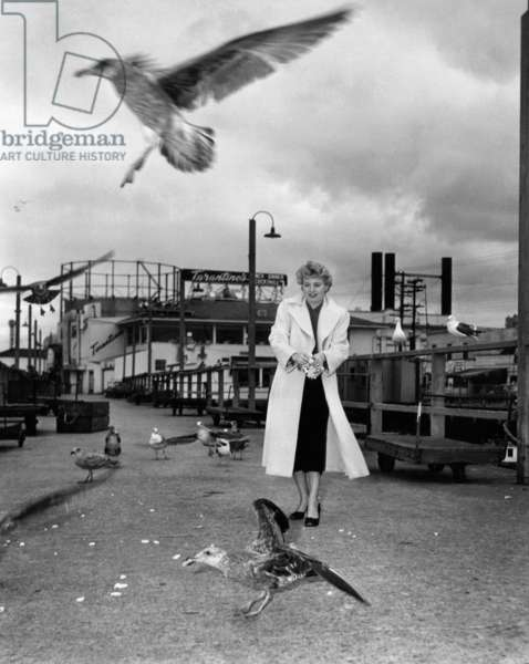 Shelley Winters: THE RAGING TIDE, Shelley Winters, taking time out from shooting to feed the seagulls around San Francisco's Fisherman's Wharf, 1951