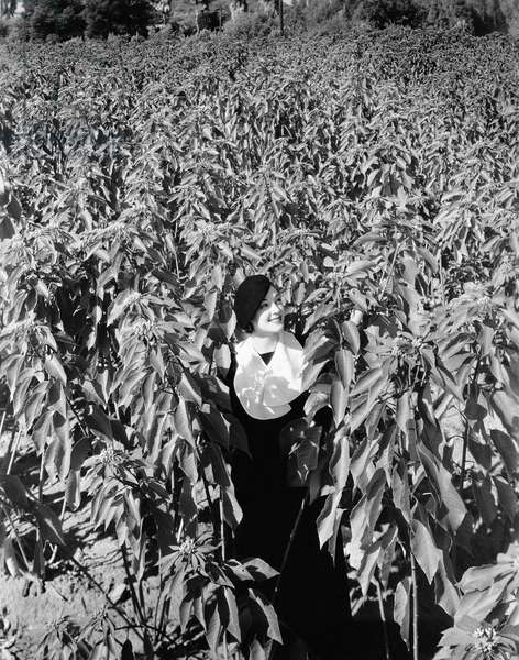Woman Standing in Field of Tall Poinsettia Plants
