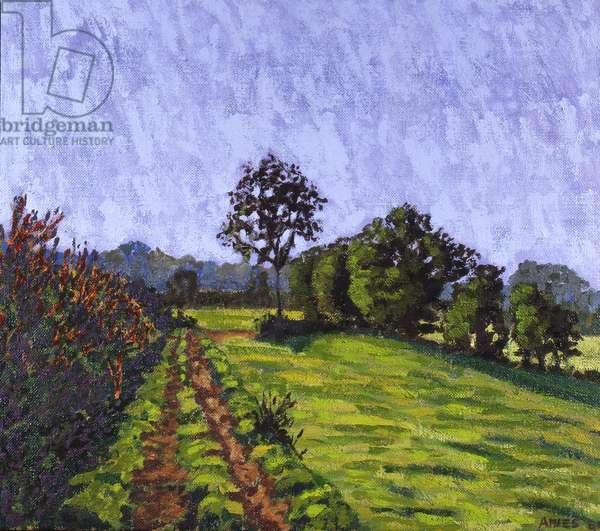 Field (oil on canvas)