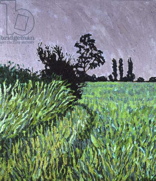 Field - Norfolk (oil on canvas)