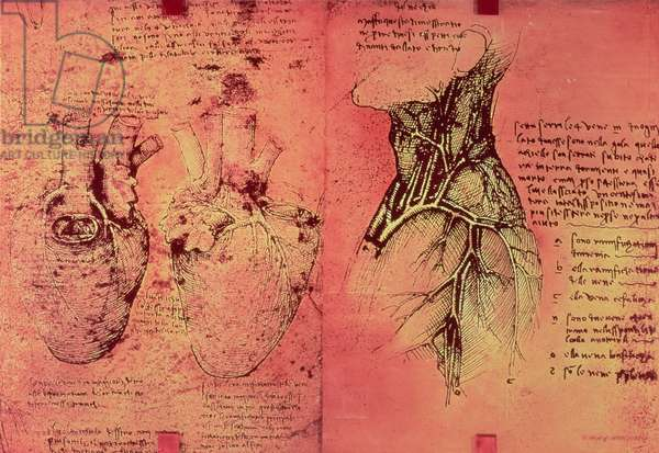 Anatomical drawing of hearts and blood vessels, fol. 3v from Quaderni di Anatomia vol. 2, 1499 (pen & ink on paper)