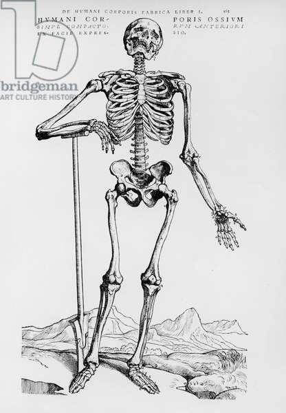 Human Skeleton (b/w print)