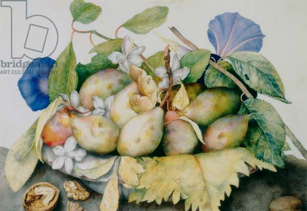Plate of plums, jasmine and walnuts