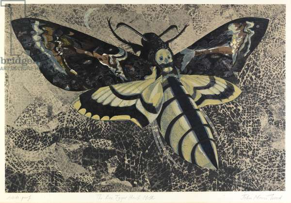 The Bee Tyger Hawk Moth (linocut)
