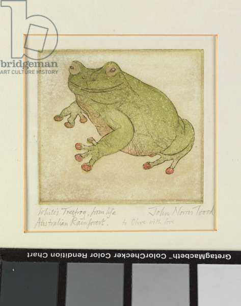 White's Treefrog, 1999 (etching)