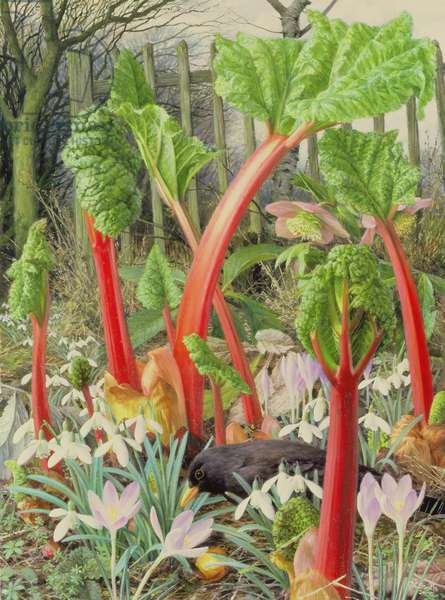In the Rhubarb Patch, 2000 (oil on board)