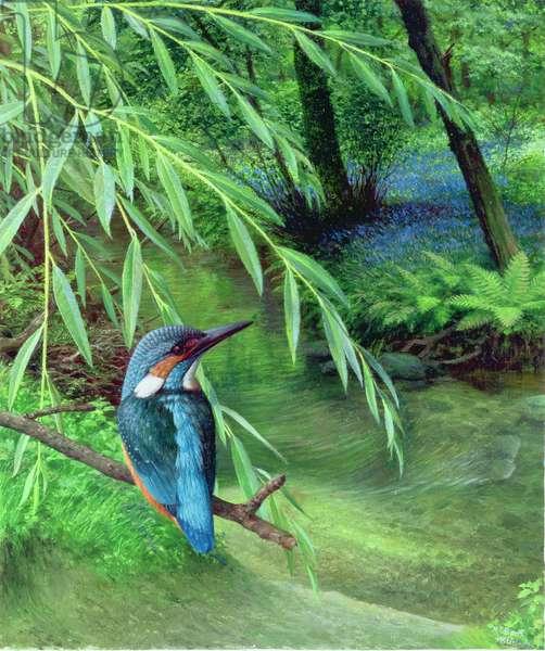Kingfisher, 1996 (oil on board)