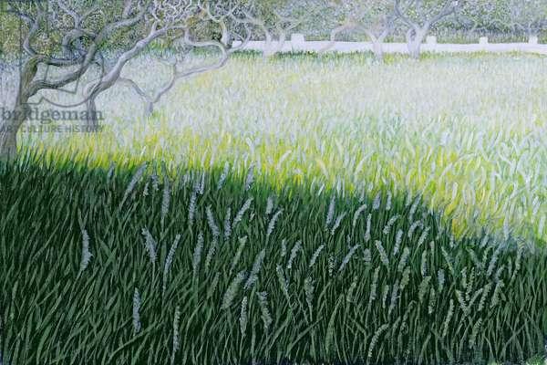 Field in Zante, 2007 (acrylic on cardboard)