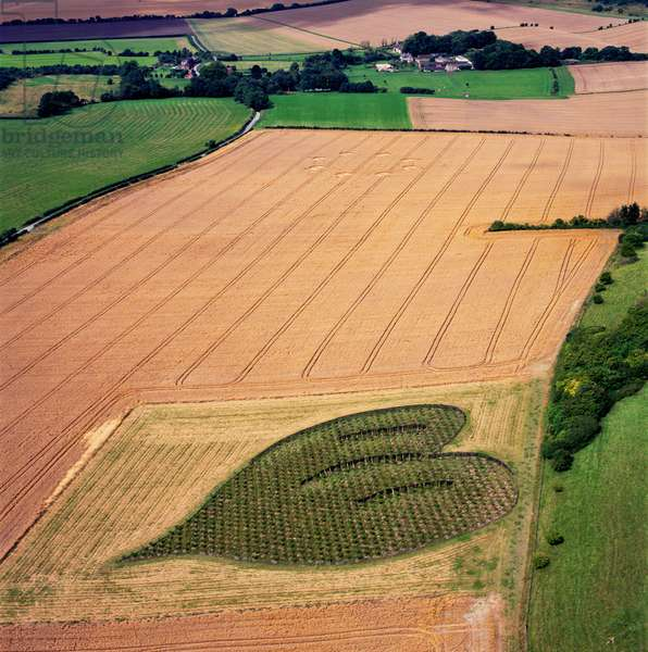 Crop circle in wheat, Oare, Wiltshire, 21st June 2010 (aerial photograph)