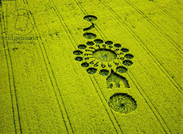Crop circle in oilseed rape field, Milk Hill, Alton Priors, Vale of Pewsey, Wiltshire, 15th April 1999 (aerial photograph)