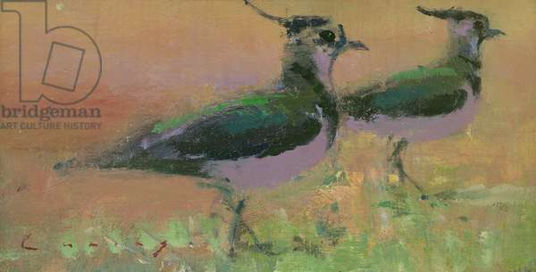 Plovers (Lapwing) (oil on board)