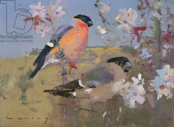 Bullfinches (oil on board)