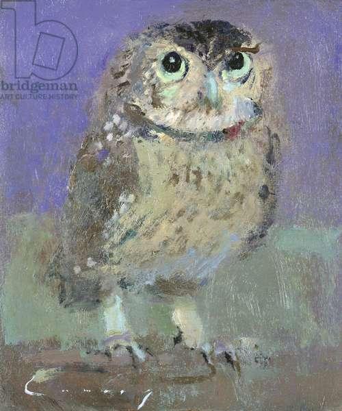 Little Owl (oil on board)