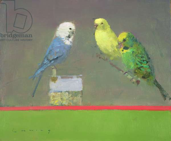 Budgies (oil on board)