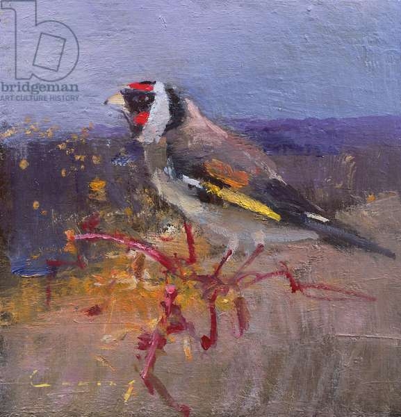Gold Finch (oil on board)