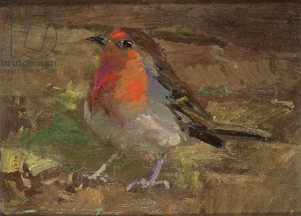 Robin (oil on board)