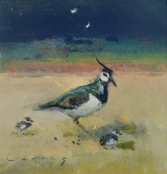 Lapwing and Chicks (oil on board)