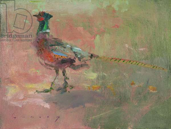 Pheasant (oil on board)