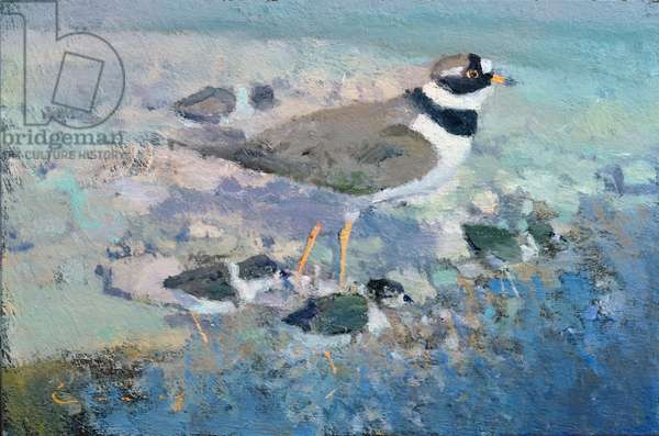 Ringed Plover and Chicks (oil on board)