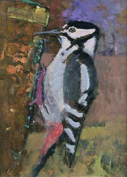 Woodpecker (oil on board)