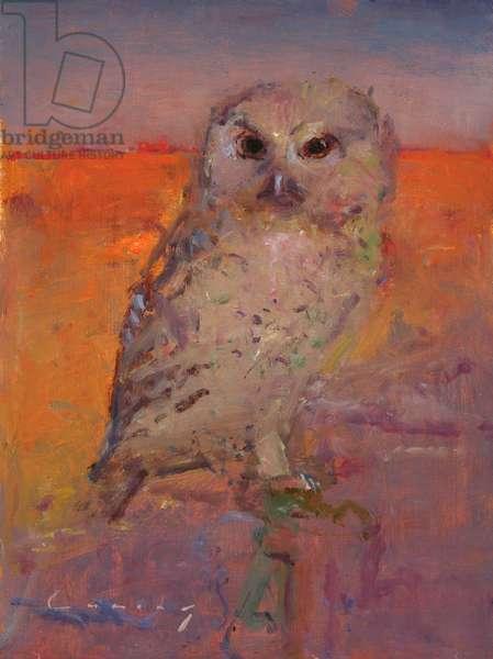 Tawny Owl (oil on board)