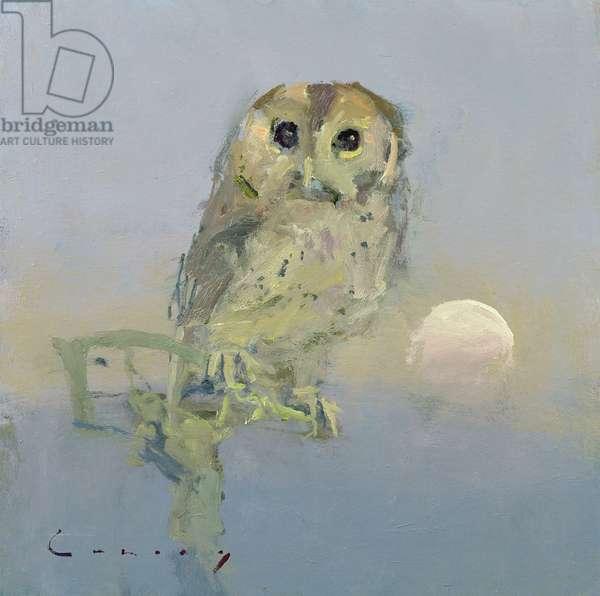 Owl (oil on board)