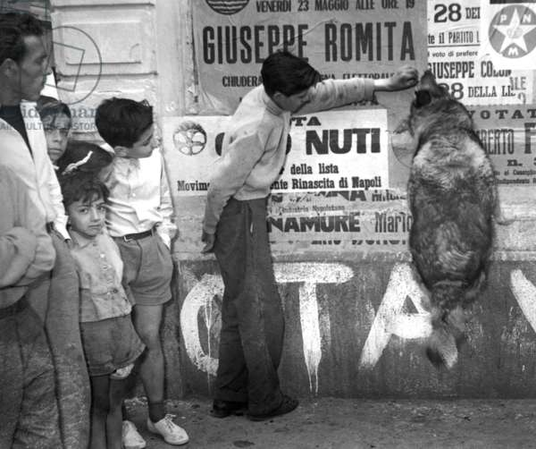"""Naples, 1953. Political elections of 1953, a scugnize makes """"dog"""" propaganda on the streets"""