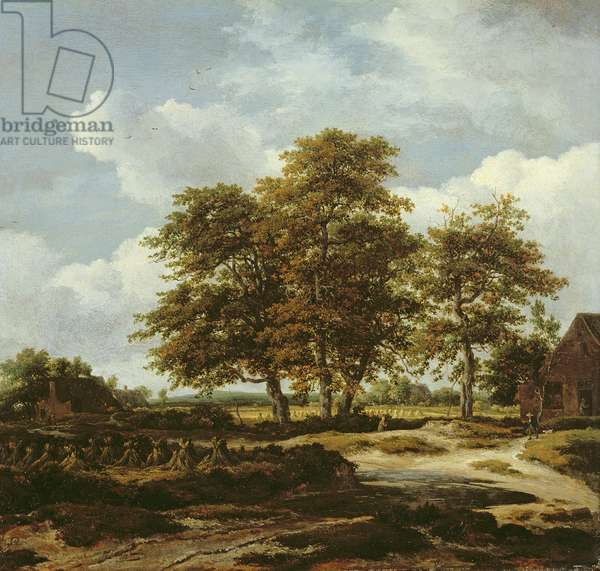 Wooded Landscape with Cornfields, c.1655-60 (oil on canvas)