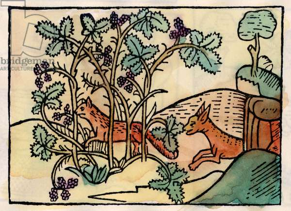 The fox and the grapes. Fable of Asop (16th century engraving)