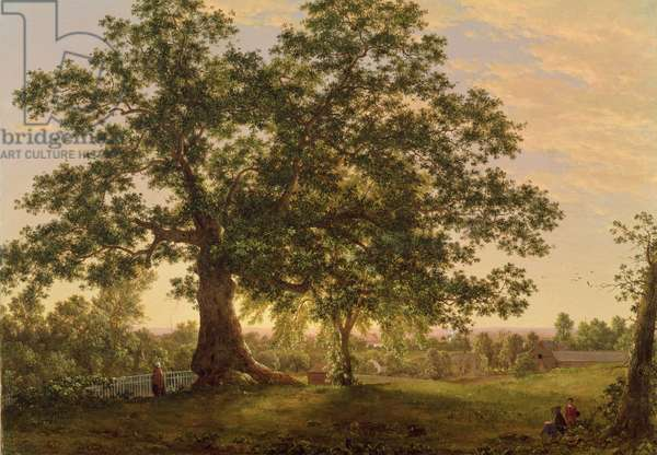 The Charter Oak at Hartford, c.1846 (oil on canvas)