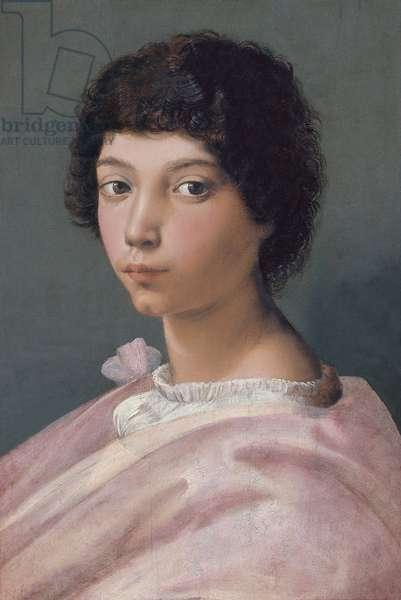 """""""""""Portrait de jeune homme"""""""" (Portrait of a young Man) Peinture de Raphael  (Raffaello Sanzio 1483 - 1520) 1518-1519 - Oil on wood Dim 43,8x29 cm Thyssen-Bornemisza Collections"""