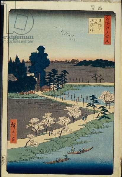 Cent vues celebres d'Edo : Azuma no mori Shrine and the Entwined Camphor (One Hundred Famous Views of Edo) - Hiroshige, Utagawa (1797-1858) - 1856-1858 - Colour woodcut - 36x24 - State Hermitage, St. Petersburg