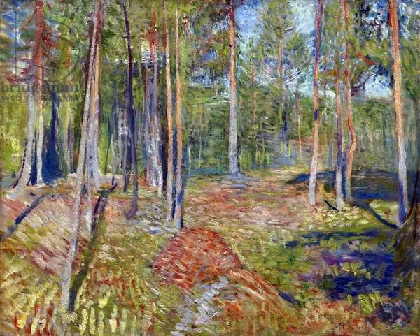 Pine Forest - Peinture de Edvard Munch (1863-1944), 1891-1892 - Oil on canvas, 58,5x72,5 - Private Collection