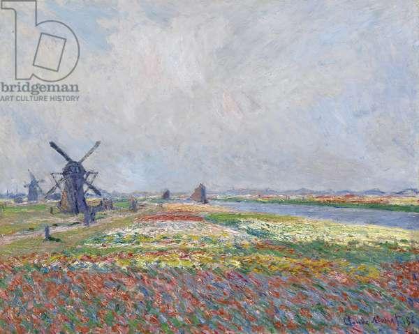 Tulip fields near The Hague par Monet, Claude (1840-1926). Oil on canvas, size : 66x81,5, 1886, Van Gogh Museum, Amsterdam