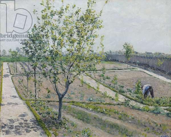 Kitchen Garden, Petit Gennevilliers - Gustave Caillebotte (1848-1894). Oil on canvas, 1881-1882. Dimension : 66x81 cm Private Collection