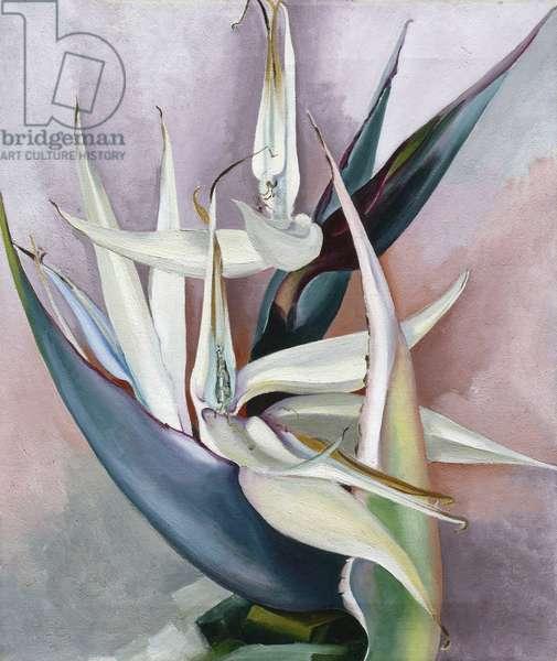 """""L'oiseau blanc de paradis"""" (White Bird of Paradise) Peinture de Giorgia O'Keeffe (1887-1986) Oil on canvas 1939 Georgia O'Keeffe Museum, Santa Fe  ©ADAGP (Tel : 33+ 01 43 59 09 79)"