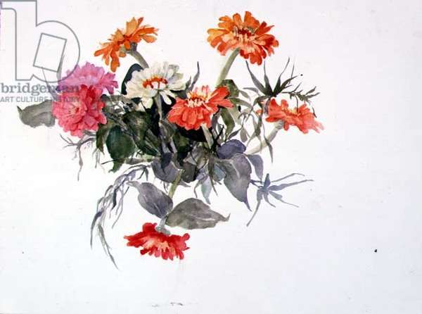 Zinnias I, 1990 (w/c on paper)