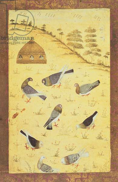 PD.179-1948 Eight pigeons and a pigeon-cote on a hill, Mughal school, early 18th century (gouache on paper)