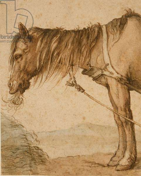 PD.159-1963 A Horse Eating Hay, c.1600-10 (pen and ink, wash)